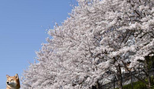 いよいよ春!イベント保険の季節到来!